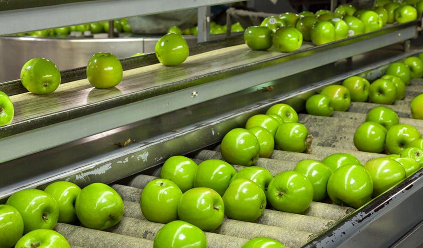 Утилизация овощей и фруктов